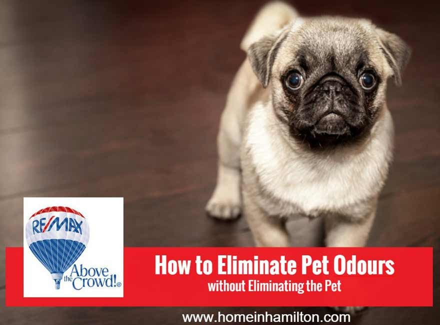 How to Eliminate Pet Odours Without Eliminating The Pet!